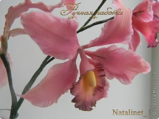Ветка орхидеи фото 2