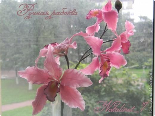 Ветка орхидеи фото 1