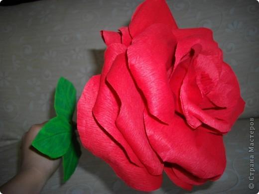 """Сделала розу для племянника. Должен был играть роль """"маленького принца"""". фото 3"""