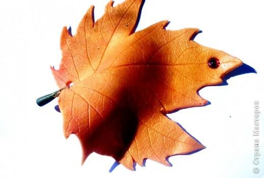 Сама природа диктует и вдохновляет. Вот они первые признаки осени. фото 2
