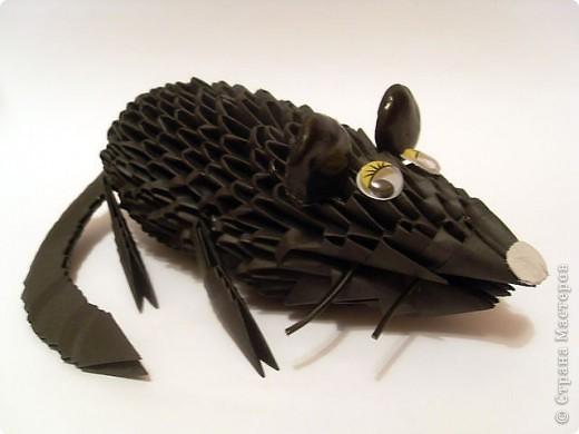 черная мышка