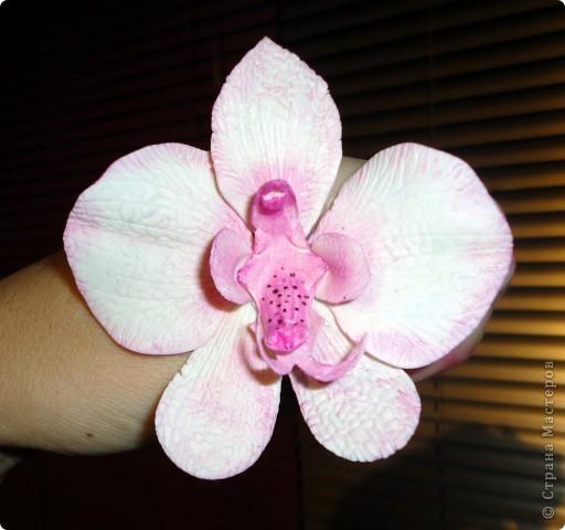 проба пера (первая орхидейка)