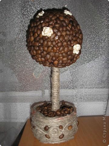 Мое кофейное дерево