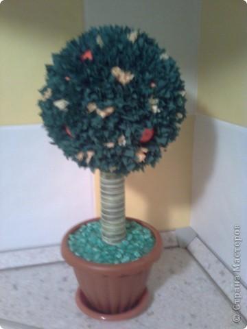 Топиарий- мандариновое дерево! фото 1