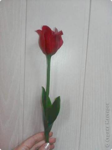 Плавный переход от роз к тюльпанам. фото 5