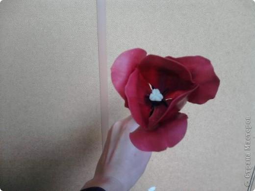 Плавный переход от роз к тюльпанам. фото 3