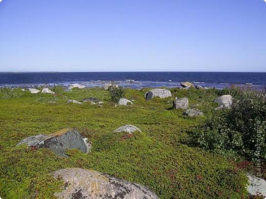 Месяц назад моя дочь ездила на Соловецкие острова к Белому морю. Соловецкий моностырь, и всё, что с ним связано - это очень интересно, но я хочу поделиться с вами тем, что поразило меня больше всего - красота северной природы. Мне, как жителю средней полосы, просто покоя не давали эти пейзажи, когда я их увидела на фото......Посмотрите вместе со мной! Итак, дочь с подругой поехали на велосипедах на южный край острова....... фото 2