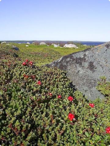 Месяц назад моя дочь ездила на Соловецкие острова к Белому морю. Соловецкий моностырь, и всё, что с ним связано - это очень интересно, но я хочу поделиться с вами тем, что поразило меня больше всего - красота северной природы. Мне, как жителю средней полосы, просто покоя не давали эти пейзажи, когда я их увидела на фото......Посмотрите вместе со мной! Итак, дочь с подругой поехали на велосипедах на южный край острова....... фото 13