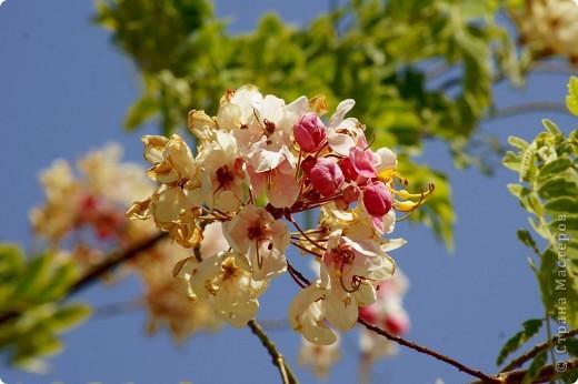 Доброго времени суток,дорогие Мастерицы!Разрешите показать Вам чудесные цветы северной Африки. Которые, несмотря на палящее солнце и изнуряющую жару, радуют нас  своей красотой и необычностью формы и цвета.   фото 2