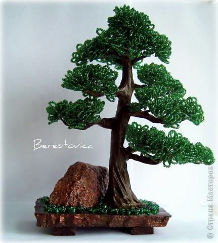 Альбом пользователя Berestovica.  16. Альбом (36). бонсай. нра. сосна.  Очередное дерево с камнем.