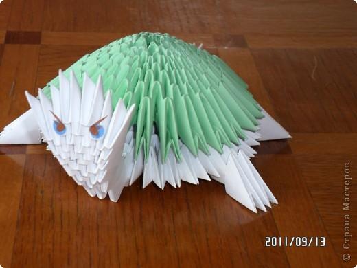 черепаха фото 1
