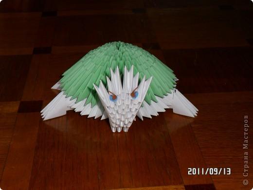 черепаха фото 2