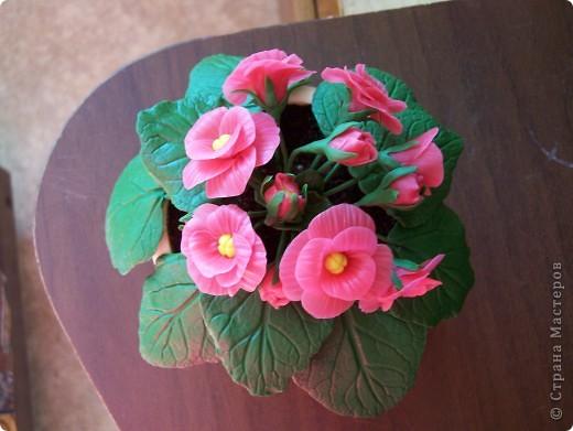 Здравствуйте дорогие друзья.Вот выставляю новенький цветочек,хотелось слепить фиалку,но что-то по моему не совсем похоже. фото 2