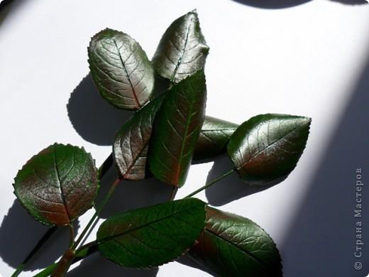 Лепила эти листья специально для мастер-класса. Может кому-то что-то пригодится. Буду очень этому рада! фото 5