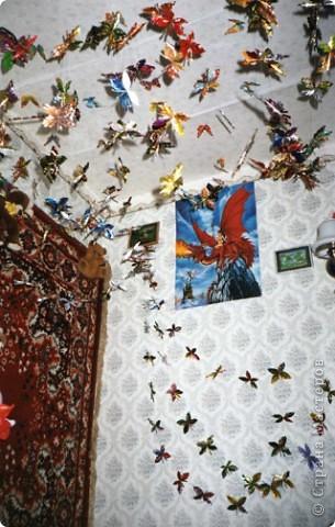 Наши бабочки фото 1