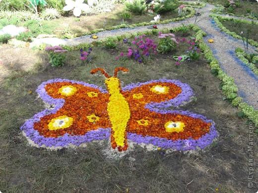 Каждый год в начале сентября в городе Белая Церковь проходит День города и так называемый Праздник цветов. Приглашаю всех желающих насладится красивым зрелищем к которому мастера готовятся целый год. фото 1