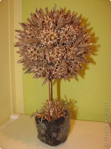 шишки с дерева платан и стручки от люпина, горшочек мхом обделан фото 1