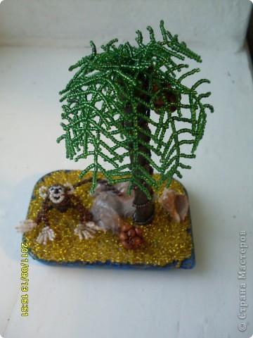первая пальмочка :)   фото 1