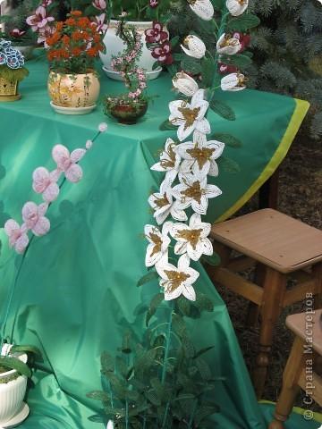 Каждый год в начале сентября в городе Белая Церковь проходит День города и так называемый Праздник цветов. Приглашаю всех желающих насладится красивым зрелищем к которому мастера готовятся целый год. фото 35
