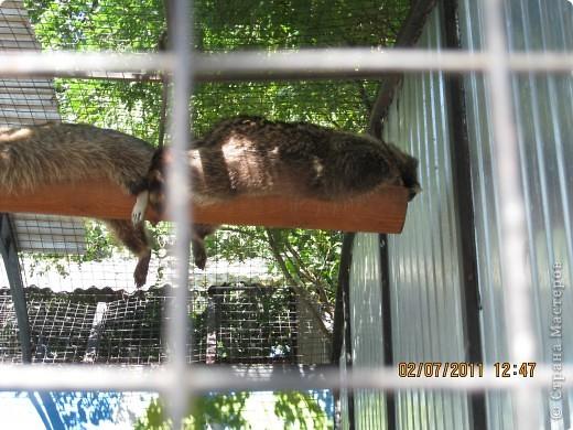 Нижегородский зоопарк фото 2