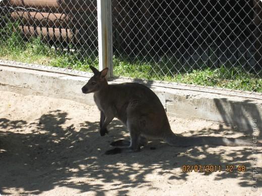 Нижегородский зоопарк фото 1