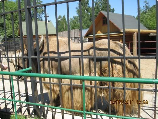Нижегородский зоопарк фото 15