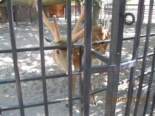 Нижегородский зоопарк фото 16