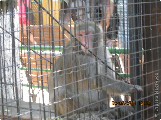 Нижегородский зоопарк фото 17