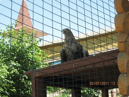 Нижегородский зоопарк фото 18
