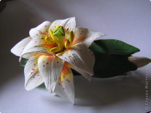 Как идея....Махровая азиатская лилия.