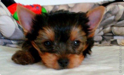 Моя собака. фото 4