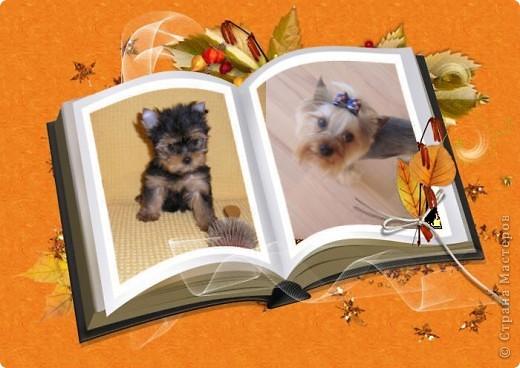 Моя собака. фото 1