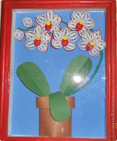 У меня вот такая орхидея. Она стала подарком для любимой сестры.