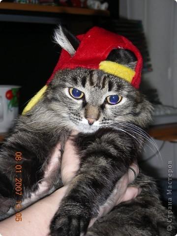 Знакомтесь - это наш кот Степан. Подобрали на улице, т.ч. порода двортерьер. Окрас очень подходит к породе Мейн-Кун, может кто в дальней родне и был. фото 5