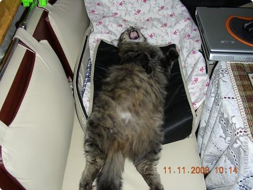 Знакомтесь - это наш кот Степан. Подобрали на улице, т.ч. порода двортерьер. Окрас очень подходит к породе Мейн-Кун, может кто в дальней родне и был. фото 4