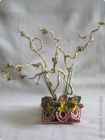 "Орхидея ""Иллюзия"" фото 2"