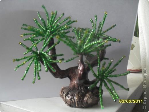 денежное деревце фото 3