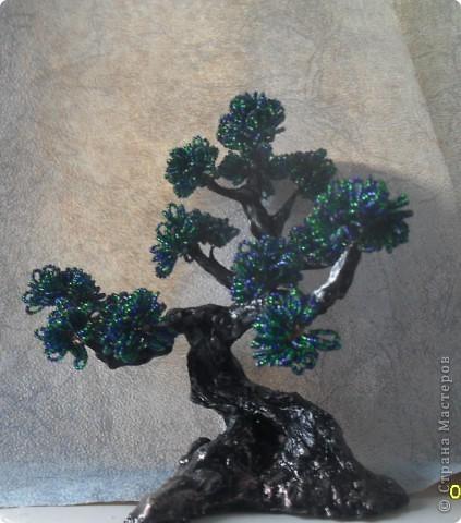 денежное деревце фото 4