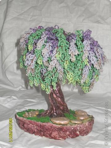 денежное деревце фото 6