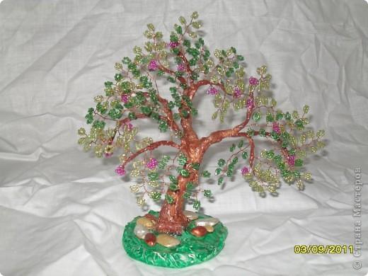 денежное деревце фото 8