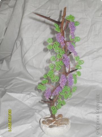 денежное деревце фото 9