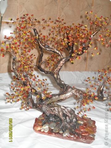 денежное деревце фото 11