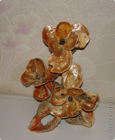 Цветы из чёрноморских ракушек