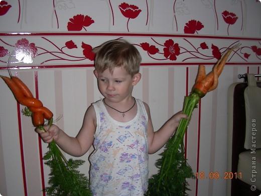 Морковки не разлучники фото 1