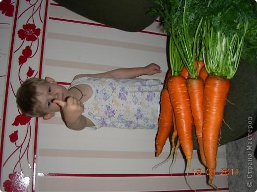 Морковки не разлучники фото 2