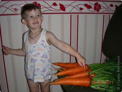 Морковки не разлучники фото 3