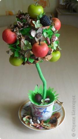 """Моё очередное фруктовое дерево, """"подсела"""" кажется я на этот вид творчества. Вроде бы пока и делать уже не из чего (закончился клей), собираю по всем углам и вперёд... В этом деревце использовала цветы гортензии, крашенные и просто сушёные..., добавила кофейных зёрен...В общем сборная солянка. фото 1"""