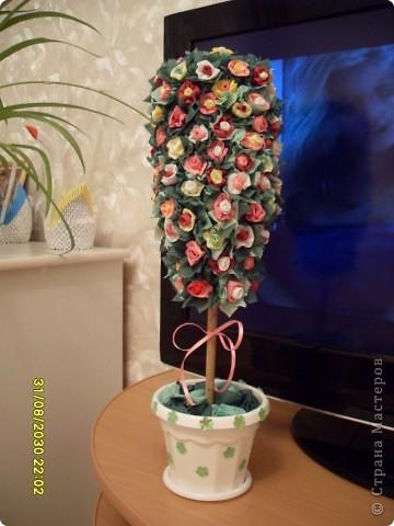 Моё деревце фото 1