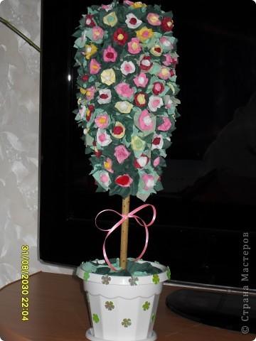 Моё деревце фото 2