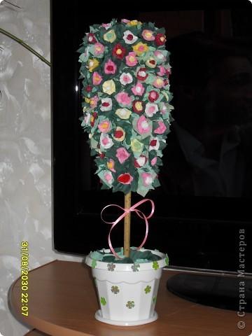 Моё деревце фото 4